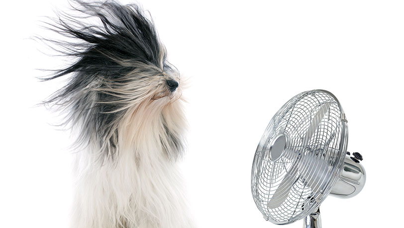 Home Humidity: What you need to know